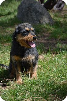 Terrier (Unknown Type, Medium) Mix Dog for adoption in Mountain Center, California - Lita