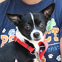 Adopt A Pet :: Panda - Palmdale, CA