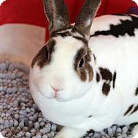 Adopt A Pet :: Gavin - Welland, ON