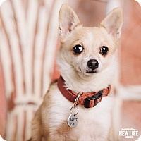 Adopt A Pet :: Tiffany - Portland, OR