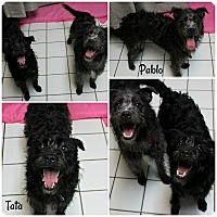 Adopt A Pet :: Tata & Pablo - Forked River, NJ
