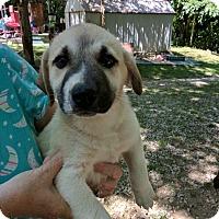 Adopt A Pet :: Jelly Bean - Hohenwald, TN