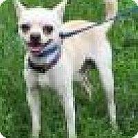 Adopt A Pet :: Coco - Elkins, WV