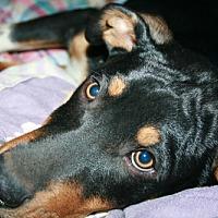 Adopt A Pet :: **Rio** - Ponca City, OK