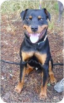 Rottweiler Mix Dog for adoption in Salem, Oregon - Van
