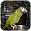 Photo 1 - Macaw for adoption in Neenah, Wisconsin - Rudy