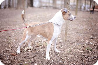 Terrier (Unknown Type, Medium) Mix Dog for adoption in Edwardsville, Illinois - Sugar