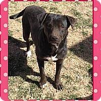 Labrador Retriever Mix Dog for adoption in Midland, Texas - Luna