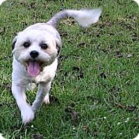 Adopt A Pet :: Yoshi - Cantonment, FL