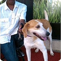 Adopt A Pet :: Susannah - Alexandria, VA