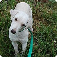 Adopt A Pet :: Patience - Albany, NY