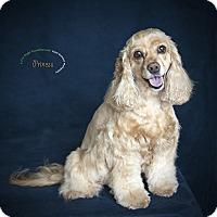 Adopt A Pet :: Princess - Rancho Mirage, CA