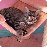 Adopt A Pet :: Lynx - Douglas, ON