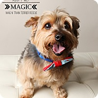 Adopt A Pet :: Magic-Pending Adoption - Omaha, NE