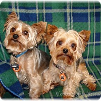 Adopt A Pet :: The Brothers - Palm City, FL