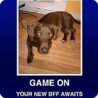 Adopt A Pet :: Tyson - Morrisville, PA