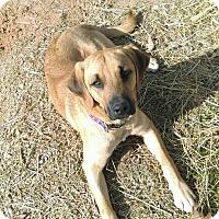 Adopt A Pet :: Perry - Burlington, NJ
