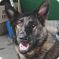 Adopt A Pet :: Sophie - Grafton, MA