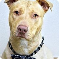 Adopt A Pet :: Dug - Dublin, CA
