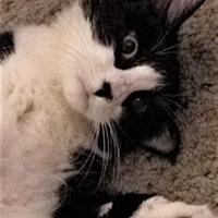 Adopt A Pet :: Sabine - Encinitas, CA