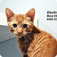 Adopt A Pet :: Devin - Lincoln, NE