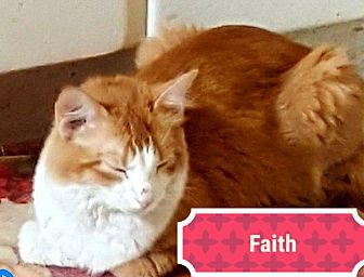 Domestic Mediumhair Cat for adoption in Painted Post, New York - Faith