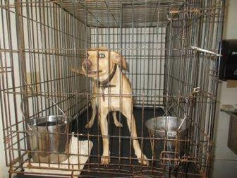 Labrador Retriever Mix Dog for adoption in Circleville, Ohio - JENKINS