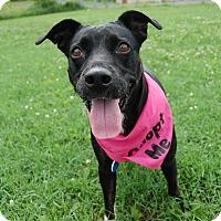 Adopt A Pet :: Rain - Wilmington, DE