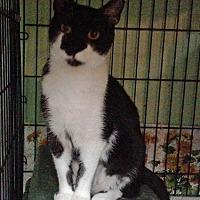 Adopt A Pet :: Jolene - Columbus, OH
