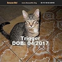Adopt A Pet :: Trigger - Chandler, AZ