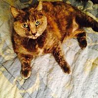 Adopt A Pet :: Precious - Central Islip, NY