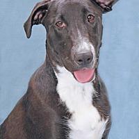 Adopt A Pet :: Pepperdine - Encinitas, CA