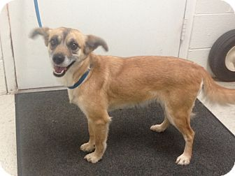 Border Terrier Mix Dog for adoption in Lancaster, Virginia - Casey