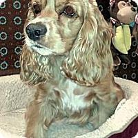 Adopt A Pet :: Emily - Sugarland, TX