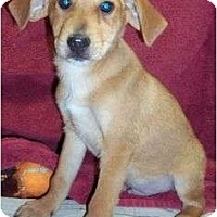 Adopt A Pet :: Duffy reduced - Londonderry, NH