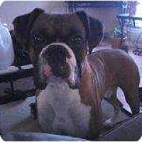 Adopt A Pet :: Chance - Alliance, NE