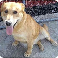 Adopt A Pet :: MIndy - Fowler, CA