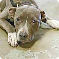 Adopt A Pet :: Ophelia - URGENT - Seattle, WA