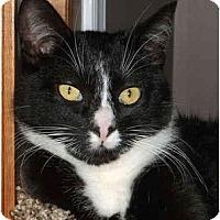 Adopt A Pet :: Devon - Colmar, PA