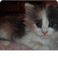 Adopt A Pet :: Flower - Acme, PA
