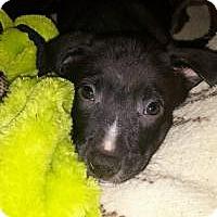 Adopt A Pet :: Liberty - Marlton, NJ
