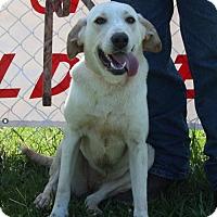 Adopt A Pet :: Jen Jen (Jennifer) - Grayson, LA