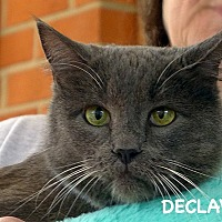 Adopt A Pet :: Harry - Durham, NC