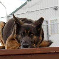 Adopt A Pet :: Azura - Colorado Springs, CO