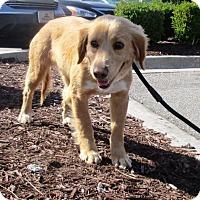 Adopt A Pet :: Kelly #2 - Murrells Inlet, SC