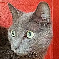 Adopt A Pet :: Tully - Sarasota, FL