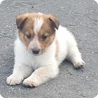Adopt A Pet :: Tessa - Evergreen, CO