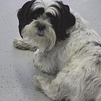 Adopt A Pet :: Hobie - Phoenix, AZ