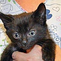 Adopt A Pet :: Fidget - Wildomar, CA
