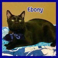Adopt A Pet :: Ebony - Jasper, IN